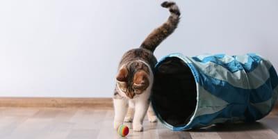 mantener activo a mi gato sin que salga
