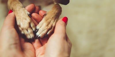 Come usare il tea tree oil per i cani?