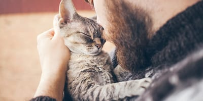 uomo-bacia-gatto