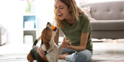Coronavirus: 3 Tipps, um den Hund in Quarantäne zu beschäftigen