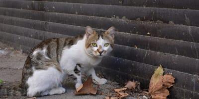 gatto mangia croccantini