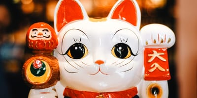 Japanese cat names: 15 cat name ideas straight from Japan