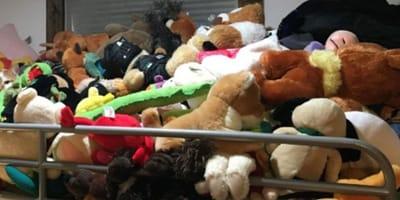 cat hiding amongst mountain of plush toys