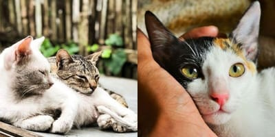 Cat shelter's urgent plea for new homes for pets as virus forces them to close