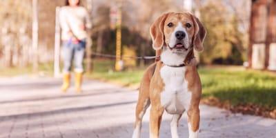 Coronavirus: boom di adozioni di cani, l'ENPA si oppone