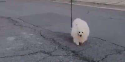 Coronavirus: trova un'idea geniale per portare in giro il cane (Video)