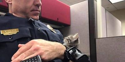 gata huerfana con policia