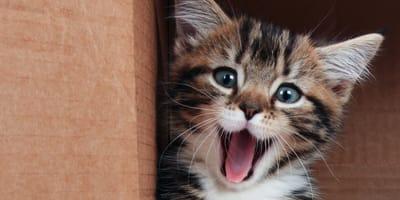 gatito sonriente