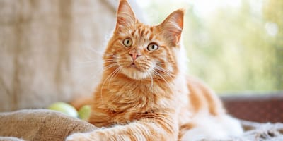 25 awesome cat names for your ginger cat or kitten