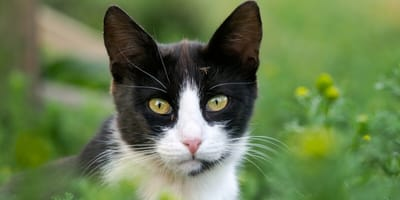 25 name ideas for your black and white cat: Get inspired!