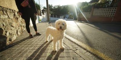 Cómo pasear a mi perro: 3 tips para un paseo sin problemas