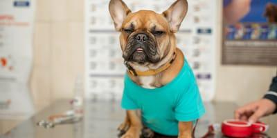 Razones para tener un seguro médico para perros