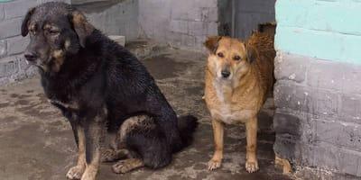 rescatan a dos perritos bajo la lluvia en ensenada