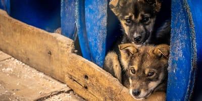 protectoras de animales en riesgo por coronavirus