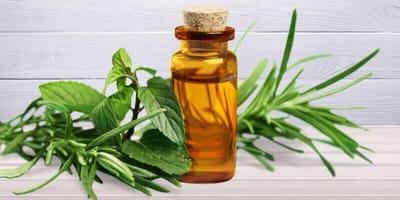 Natürliche Medizin: Ist Teebaumöl für Hunde giftig?