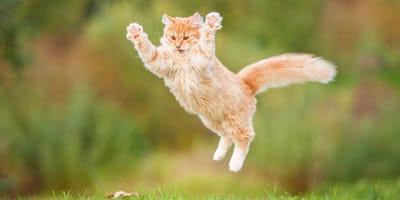 Ginger cat jumping onto something