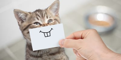 25 funny cat name ideas: Get ready for the giggles!
