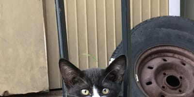Czarno-biały bezdomny kotek