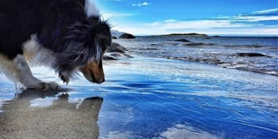 dog looking at his reflection in the water
