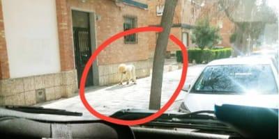 Uomo vestito da cane per uscire dalla quarantena: lo scherzo finisce male