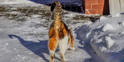 Warum zeigt die Katze uns so gerne ihren Hintern?