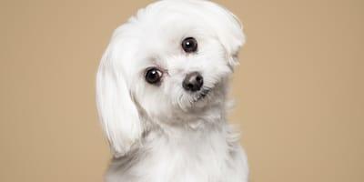 Dai al tuo cucciolo il nome di uno dei cani dei cartoni animati!
