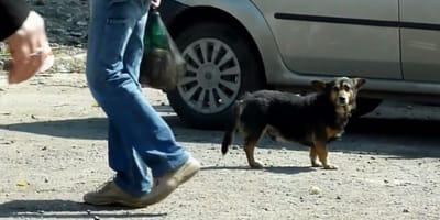 Ein kleiner Straßenhund vor einem Auto