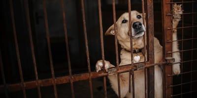 perro problema busca a su dueño en redes