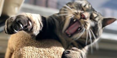 Kot robi masaż psu