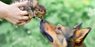 Cómo hacer para que un perro y un gato se lleven bien