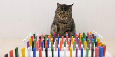 gato jugando al domino
