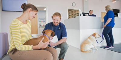 Two dogs with owners at the vet making an appointment