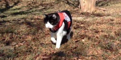 Kot detektyw w parku jesienia
