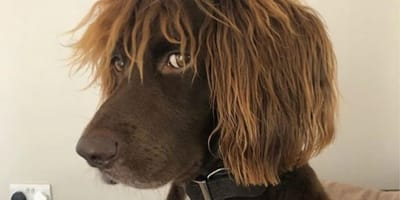 10 dog posts that can turn any frown upside down