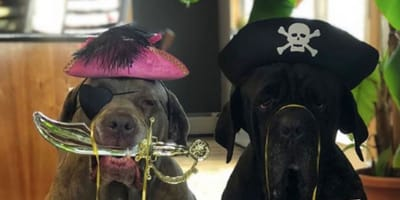 Family spend self-isolation recreating Disney's POTC ride (with a special cameo from dog)