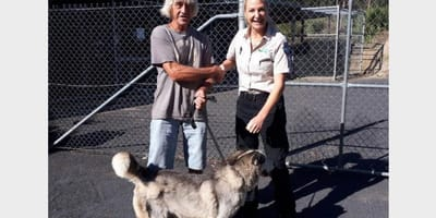 Pies husky z opiekunem i policjantką