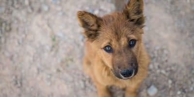 <p>El miedo al contagio puede hacer que las personas abandonen sus mascotas.&nbsp;</p>