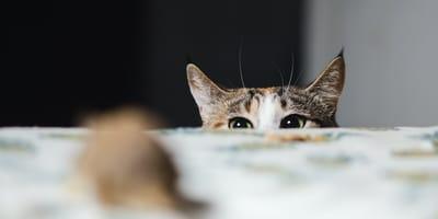 """Perché i gatti portano i topi? Il significato del """"regalo"""" al padrone"""