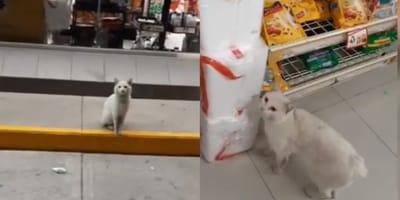<p>Las personas encontraban a este gatito a la entrada del OXXO, e inmediatamente sent&iacute;an empat&iacute;a por &eacute;l.&nbsp;</p>