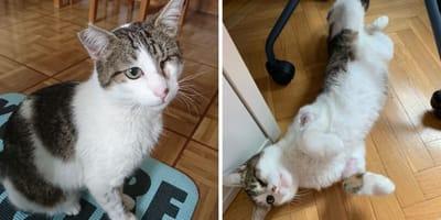 gato tuerto adopcion