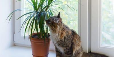 https://www.shutterstock.com/de/image-photo/cat-sits-on-white-window-sill-739809355