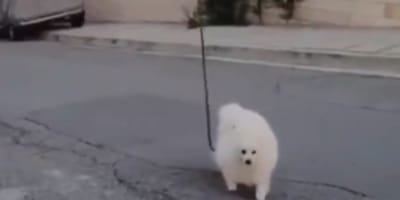 The dog went for a walk without its human