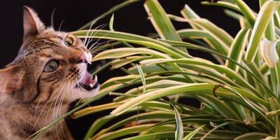 Katze und Grünlilie