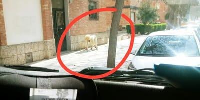 Mężczyzna w przebraniu psa na ulicach Toledo