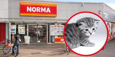 Kätzchen vor Norma Filiale