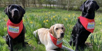 Could dogs be the answer to sniffing out the Coronavirus?