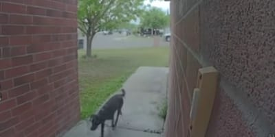 The furry criminal was caught on camera