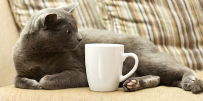 Blasenentzündung bei der Katze: Diese Hausmittel helfen