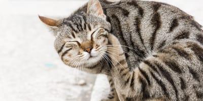 Juckreiz bei der Katze: Diese Hausmittel helfen
