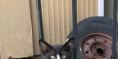 Stray cat has mark on his face that looks just like... another cat!